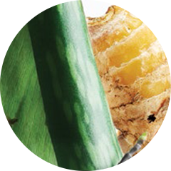 Phyto-Active Ginger Complex